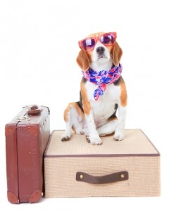 Dog on suitcase